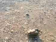 חוף מכמורת , שקיעה , סרטנים מקסימים על החוף, להזהר....לא לדרוך עליהם :)