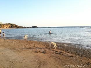 אפילו הכלבים נהנו מאוד, לא שלי (פוף היא מלטזית שובבה, שכבר היתה בים, אהבה, אבל להרגע איתה בים, בלתי אפשרי )
